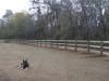 3 Board Fence